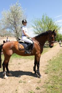 Лошадь с идеальным характером