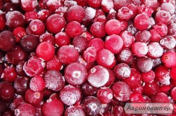 Продаж заморожених ягід: вишня, полуниця, бузина оптом