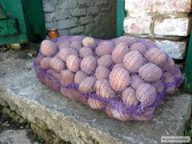 Реалізуємо картоплю товарний