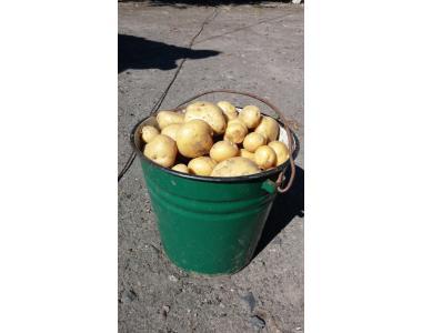 Картофель красный и белый сорта