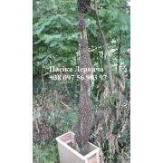 Продам безстільникові бджолопакети  карпатських бджіл
