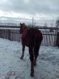 Лошак 9 месяцев