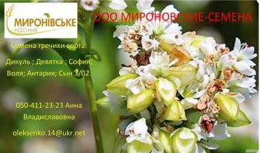 Семена гречихи Девятка; Дикуль, 1 репродукция.