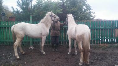 пару коней