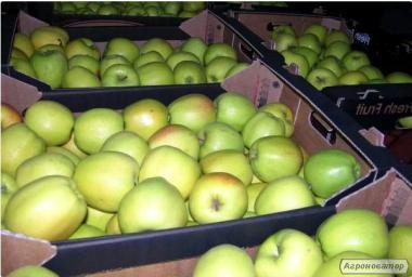 Продам яблука гуртом (Айдаред, Флоріна, Джанаголд, Чемпіон)