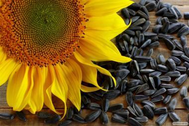 Пропонуємо насіння соняшника