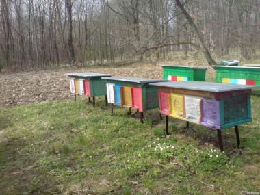 Пчелопакети, Порода Карпатка! 2017