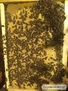 Продам пчелопакеты 4рамки,карпатской пчелы