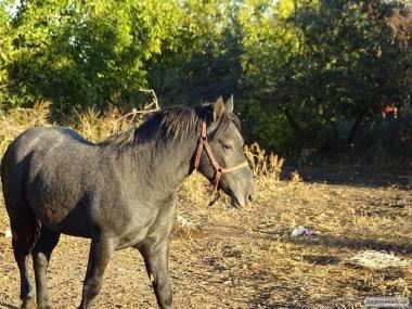 Продам советских лошадей