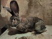Продам кролики собственного производства