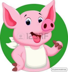 ВНИМАНИЕ!!! Владельцы свиноферм!