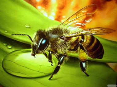 Продам бджолосім'ї, Сумы
