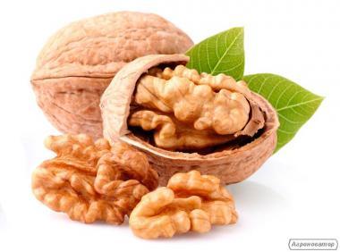 Орехи грецкие. Sale of a walnut Ukraine