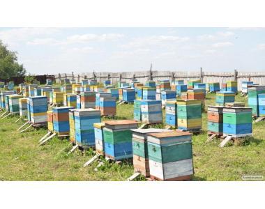 Продам якісний мед смачний