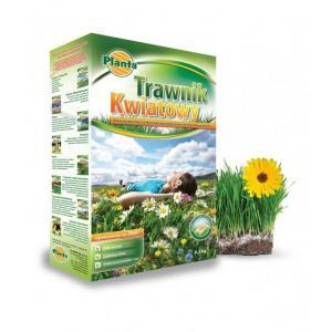 Насіння газонних трав