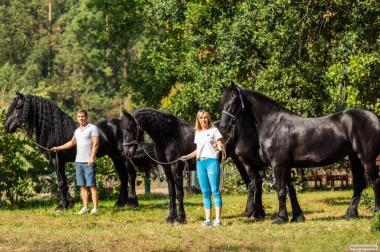 Фризские лошади в наличии в Киеве импорт Голландия