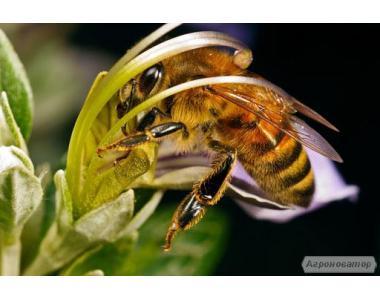 Відеопасека I - II світ бджоляра