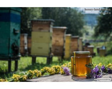 Пропонуємо якісний високогірний карпатський мед