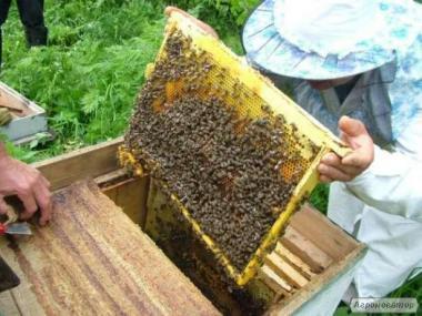 Продам якісні Бджолосім'ї. Ціна договірна.