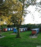 Пчелосемьи породы Карпатская