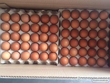 Яйця курячі. Категорія С1 С2 Експорт