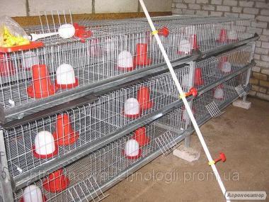 Клітка для курчат