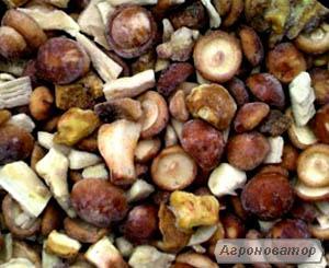 Продам гриб польский замороженный