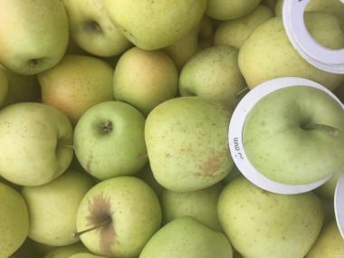 продаємо яблука і яблучне пюре асептичне