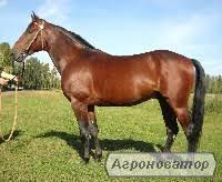 Продажа коней