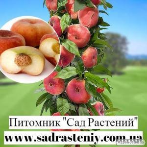 продаж елітних сортів яблуні, груші, нектарина, сливи, черешні, вишні