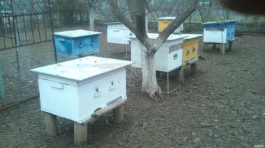 Продам бджолосім'ї навесні 2020р