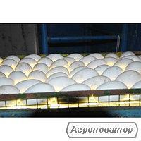 инкубационные гусиные яйца