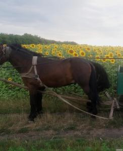 Продам коні двох і пяти років
