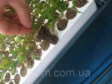 Касета для розсади томатів КТ-160 518х325х52 мм