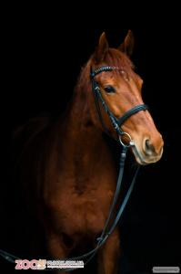 Продаётся прекрасная лошадь для души  или в матки