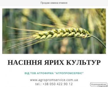 Продам насіння ярого ячменю