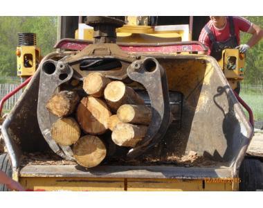 Удаление деревьев и кустарников
