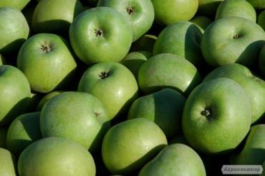 Яблоки Симиренко домашние