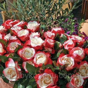 Роза Ностальжі