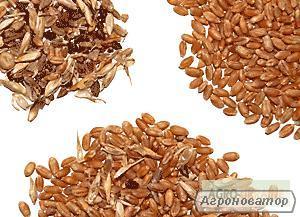 Услуги по очистке, сушке и санитарной обработке зерновых, масличных