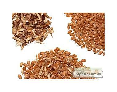 Послуги з очищення, сушіння та санітарної обробки зернових, олійних
