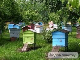 Продам бджолосім'ї ( пчелосемьи )