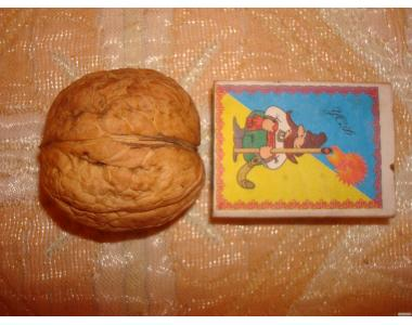 Продам саженцы грецкого ореха