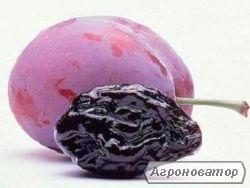 Продам чернослив Молдавский НЕДОРОГО без-дым с косточкой и без, Разные