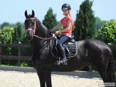Верхові коні породи Фризька