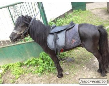 Продам дорослого заїждженого пони.Для прокату.