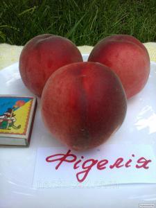 Саджанці персика сорти Фиделия, від виробника