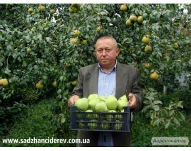 Питомник саженцев плодово-ягодных культур и кустов.
