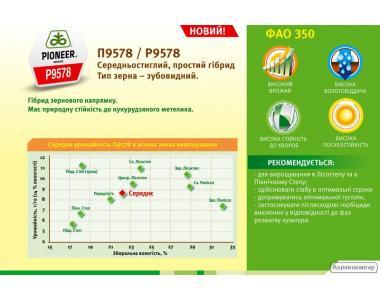 Гибрид кукурузы П9578 / P9578 ФАО 350