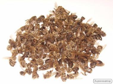 Пчелиный подмор - Хитозан
